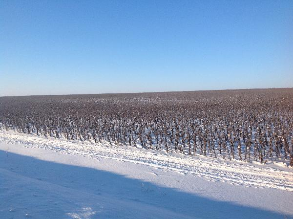 Тракторы в Ростовской области – цены, фото, отзывы, купить.